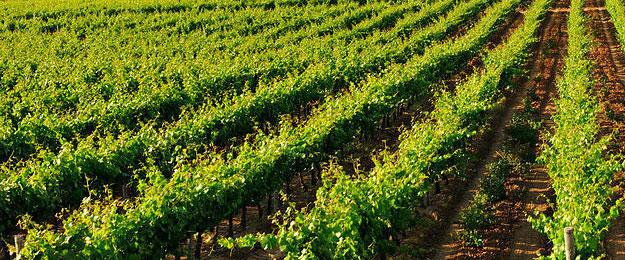 Advanced Viticulture & Management - Independent Reviews
